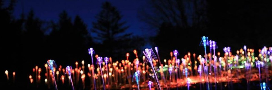 Orbes lumineuses de Bruce Munro